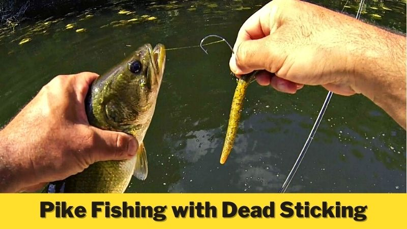 Pike Fishing with Dead Sticking