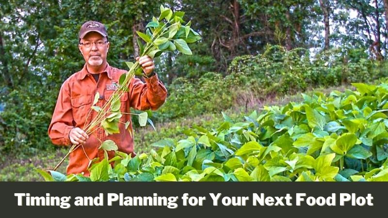 Timing and Planning for Your Next Food Plot